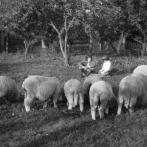 Zemědělská soběstačnost života na barácích komunistům nevoněla.